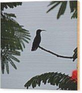 Hummingbird Silhouette Wood Print