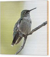 Hummingbird Sitting On A Branch Wood Print