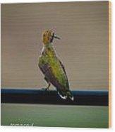 Hummingbird Sitting Pretty Wood Print