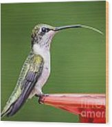 Hummingbird Sticky Her Tongue Out Wood Print