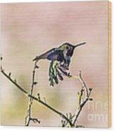 Hummingbird Stretch Wood Print