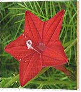 Hummingbird Vine Wood Print