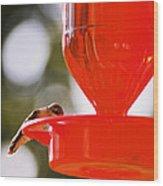 Hummingbird With Globes Wood Print