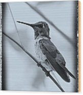 Hummingbird With Old-fashioned Frame 1 Wood Print