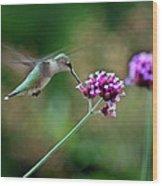 Hummingbird With Purple Verbena Wood Print