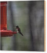 Hummingbirds 332 Wood Print