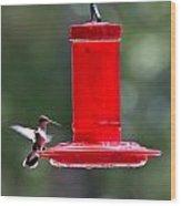 Hummingbirds 388 Wood Print