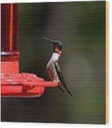 Hummingbirds 405 Wood Print