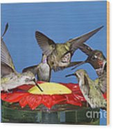 Hummingbirds At Feeder Wood Print
