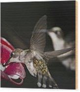 Hummingbirds In Flight Wood Print by Nelson Watkins
