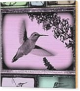 Hummingbirds In Old Frames Collage Wood Print