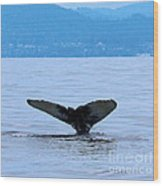 Humpback In Monterey Wood Print