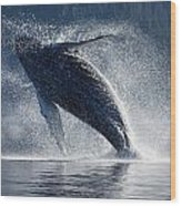 Humpback Whale Breaching In The Waters Wood Print by John Hyde