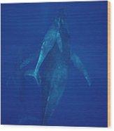 Humpback Whale Cow Calf And Escort Maui Wood Print
