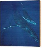 Humpback Whale Mother And Calf Hawaii Wood Print