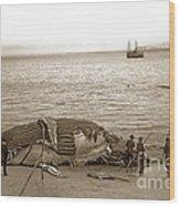 Humpback Whale On A Monterey Beach California  Circa 1896. Wood Print