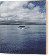 Humpback Whale Tail Slap Hawaii Wood Print