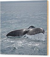 Humpback Whale Tail Wood Print