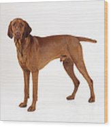 Hungarian Vizsla Dog Wood Print