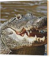 Hungry Alligator Wood Print