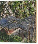 Hungry Alligator Wood Print