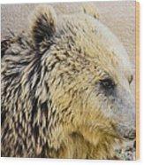 Hungry Bear Wood Print