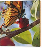 Butterfly And The Cherry Wood Print