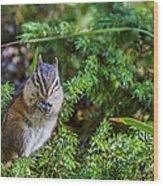Hungry Chipmunk  Wood Print
