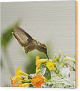 Hungry Flowerbird Wood Print