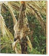 Hungry Giraffe Wood Print