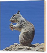 Hungry Ground Squirrel Wood Print