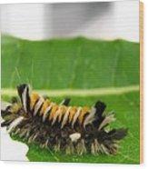 Hungry Hairy Caterpillar Wood Print