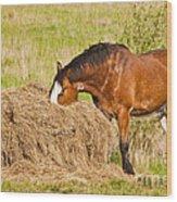 Hungry Horse Wood Print