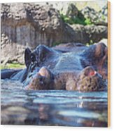Hungry Hungry Hippo Wood Print