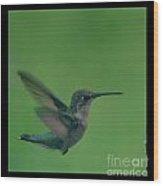 Hungry Little Hummingbird 5 Wood Print