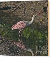 Hungry Pink Spoonbill Wood Print