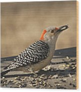 Hungry Red-bellied Woodpecker - Melanerpes Carolinus Wood Print