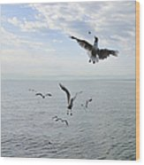 Hungry Seagulls Flying In The Air Wood Print