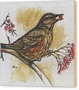 Hungry Thrush Wood Print