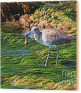 Hungry Willet Wood Print