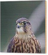 Hunters Eye Wood Print