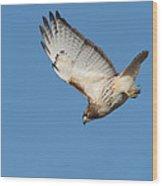 Hunting Hawk Wood Print
