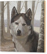 Husky In The Woods Wood Print
