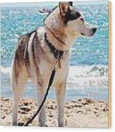 Husky On The Beach Wood Print