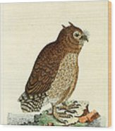 Hutum Owl  Wood Print