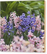 Hyacinth Garden Wood Print
