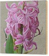 Hyacinth Pink Wood Print