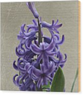 Hyacinth Purple Wood Print
