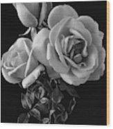 Hybrid Tea California Roses Wood Print