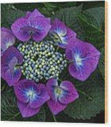 Hydranga Wood Print